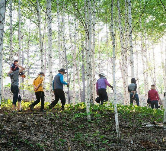 Birch Trees Tour