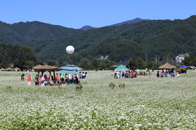 buckwheat flowers Tour