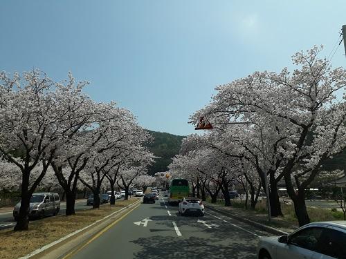 Gyeongju Bomun Lake
