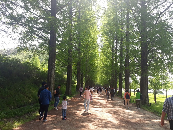 Metasequoia Road